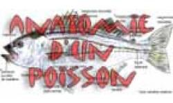 anatomie poisson exterieur